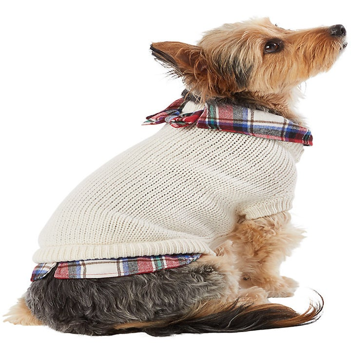 Cream knit sweater with plaid collared shirt underneath on dog