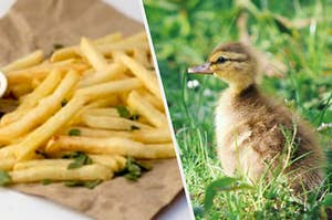 A duckling staring at french fries
