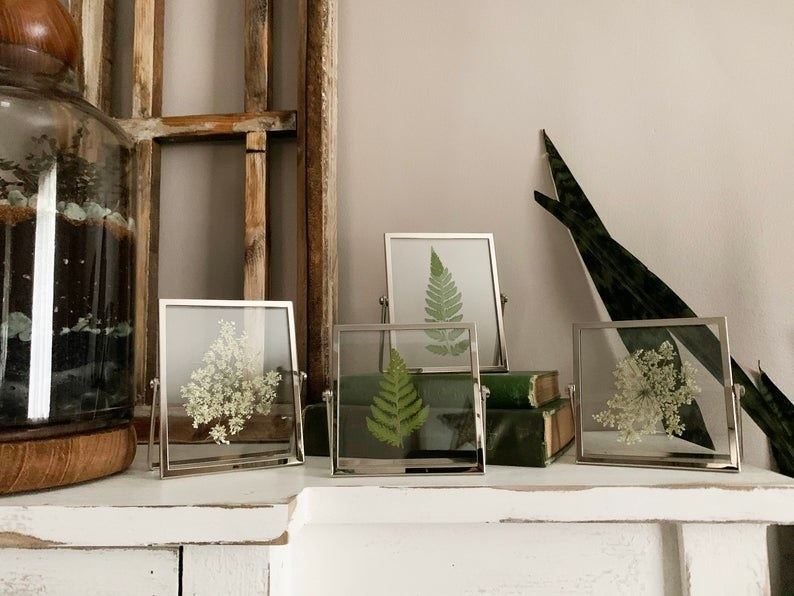Pressed fern leaves and Queen Anne Lace flowers in silver clear frames on a shelf