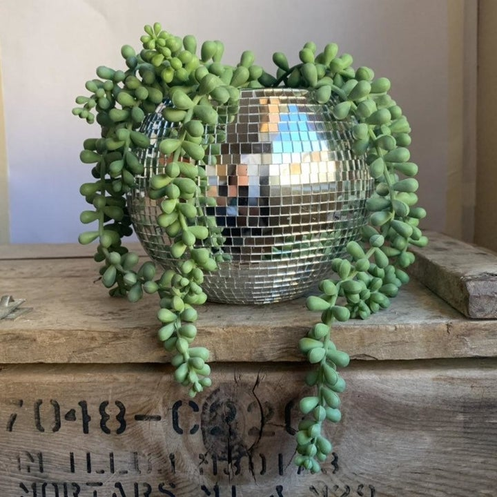 A disco ball planter with the top cut off and a draping plant inside
