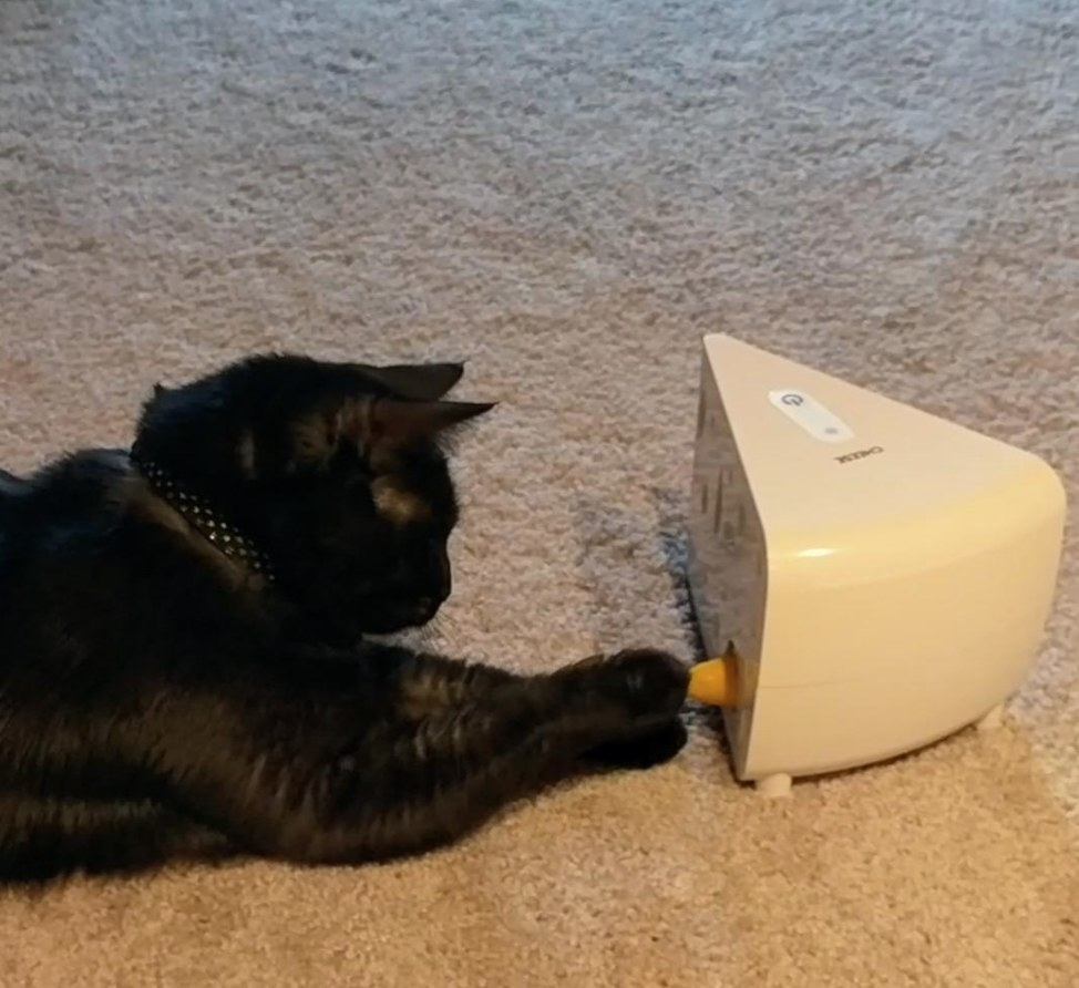 A reviewer's cat playing with the cheese game