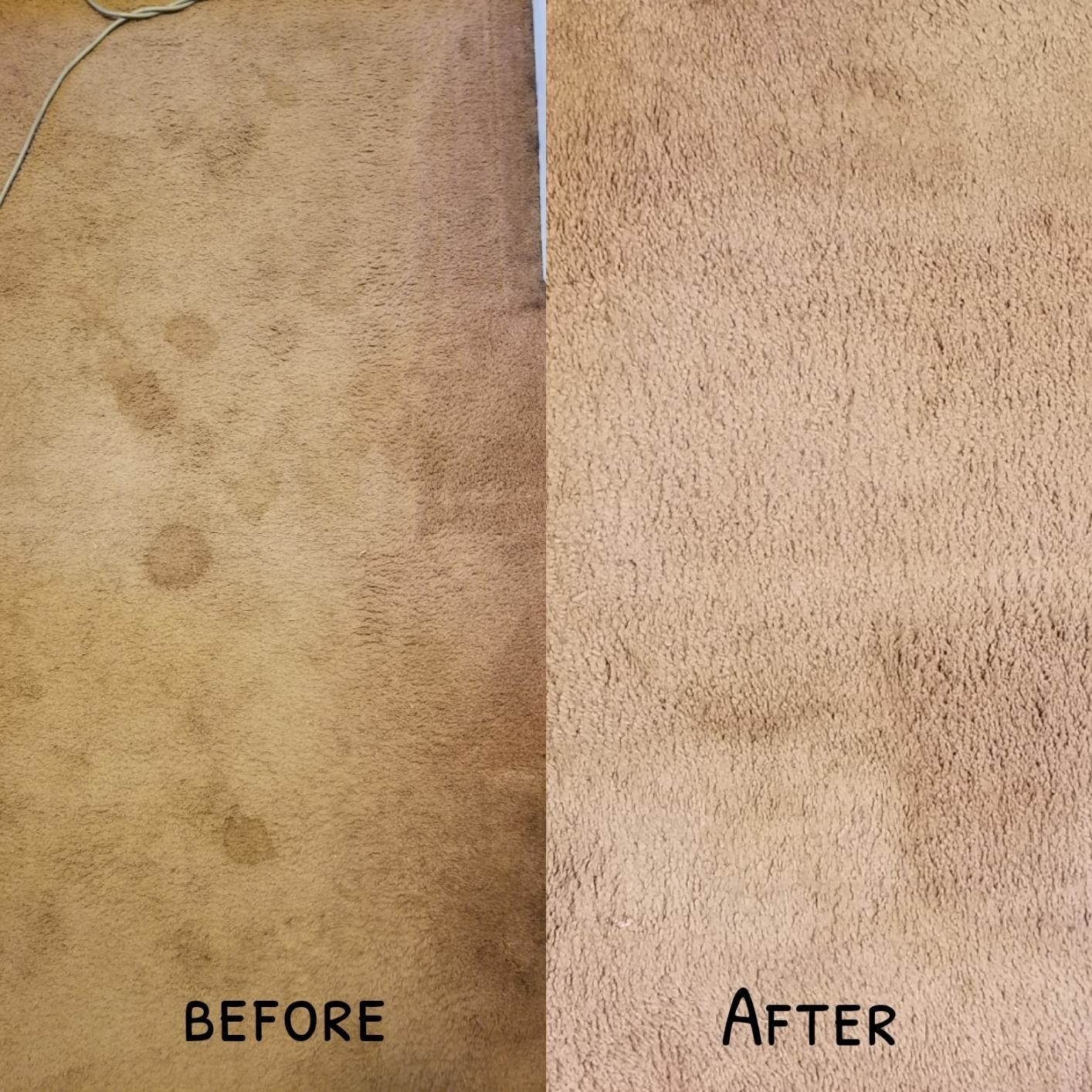 Before and after shot of stained toilet vs stain-free carpet