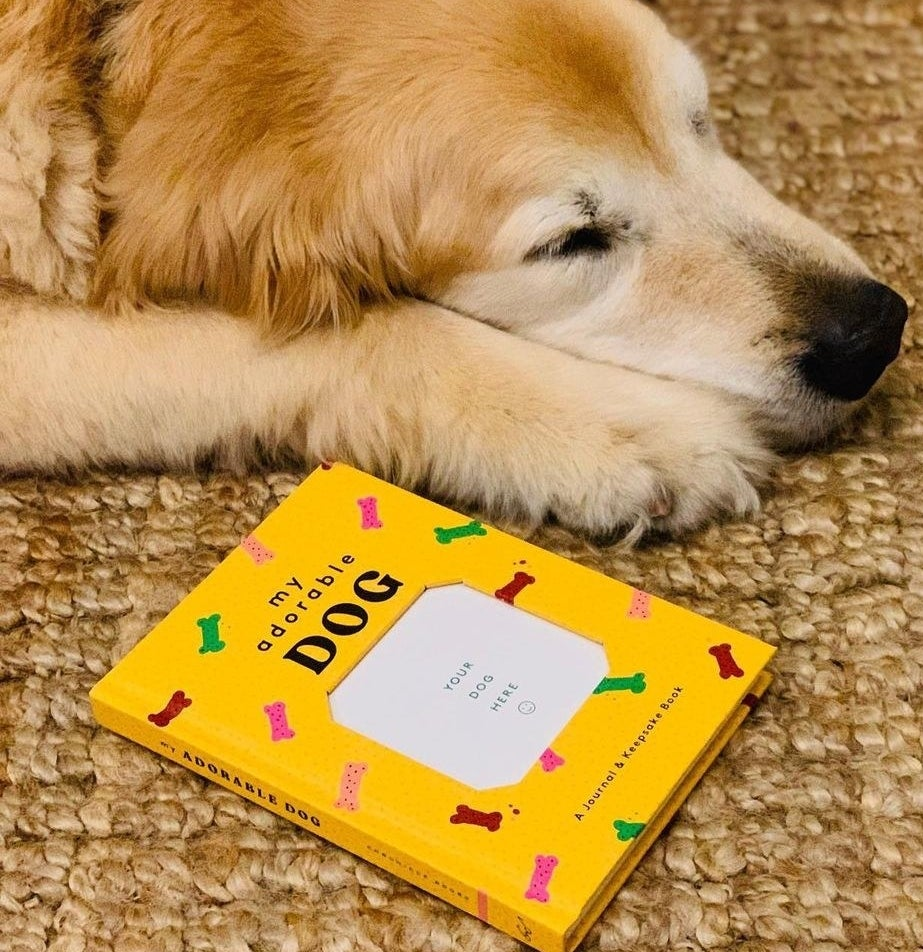 A dog lying next to the album