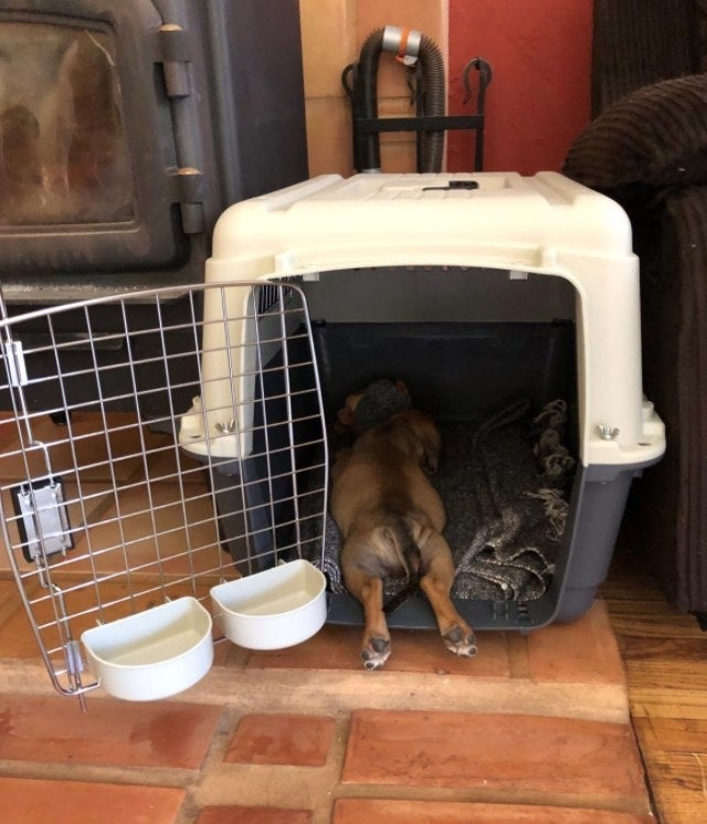 reviewer's dog in a pet carrier