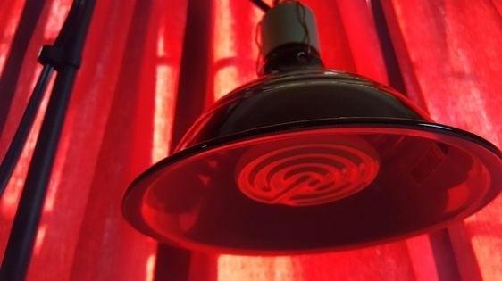 The heat lamp
