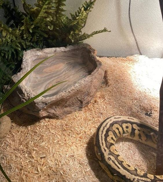 The pet bowl in a snake's home