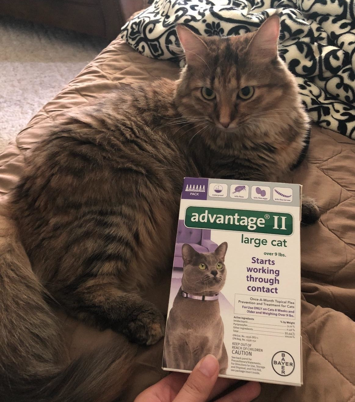 Reviewer image of product designed for cats over 9 lbs.