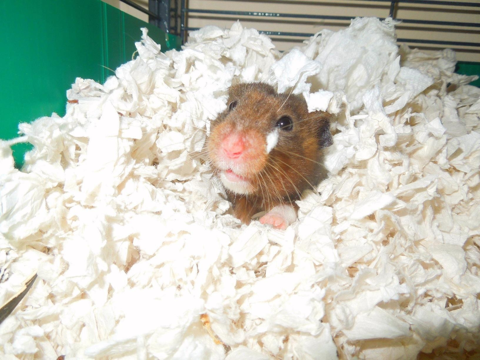 Reviewer image of soft product being enjoyed by a hamster
