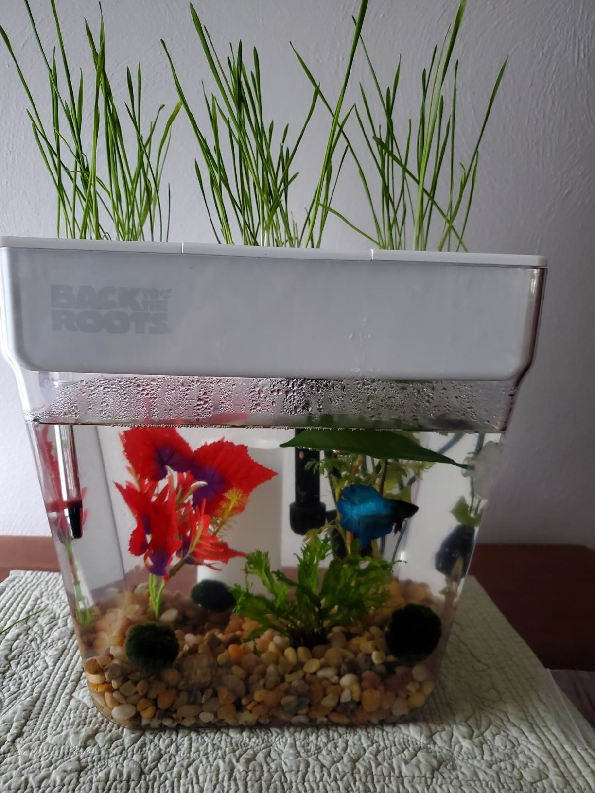 Reviewer image of self-cleaning water garden