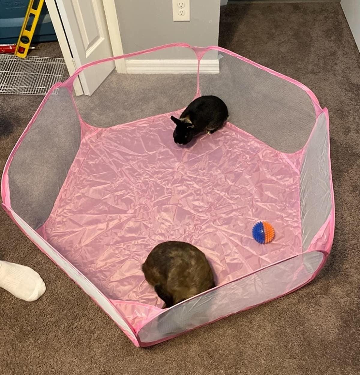 Reviewer image of bunnies inside waterproof playpen