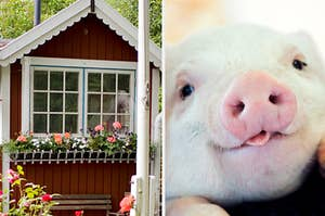 cottage and a piglet