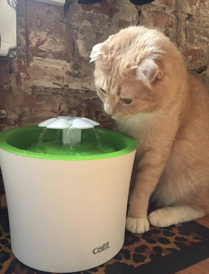 an orange cat looking at a green and white water fountain