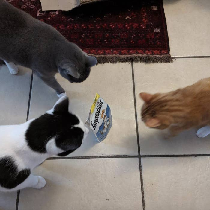 three cats staring at a bag of treats on the floor