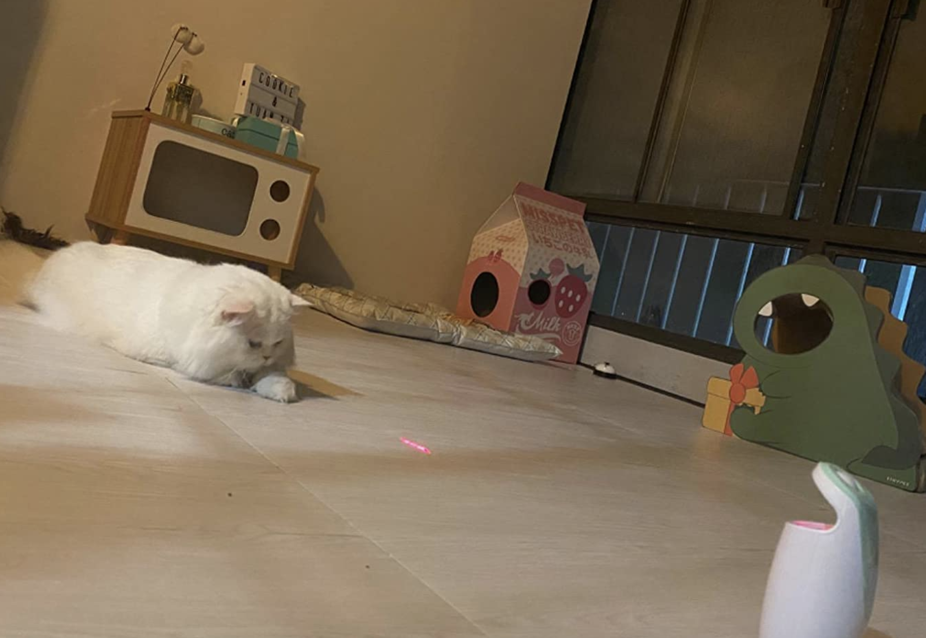 a fluffy white cat staring at a laser on the floor