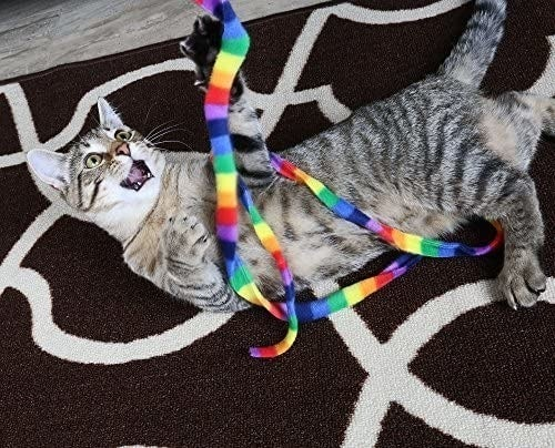 cat playing with a rainbow string