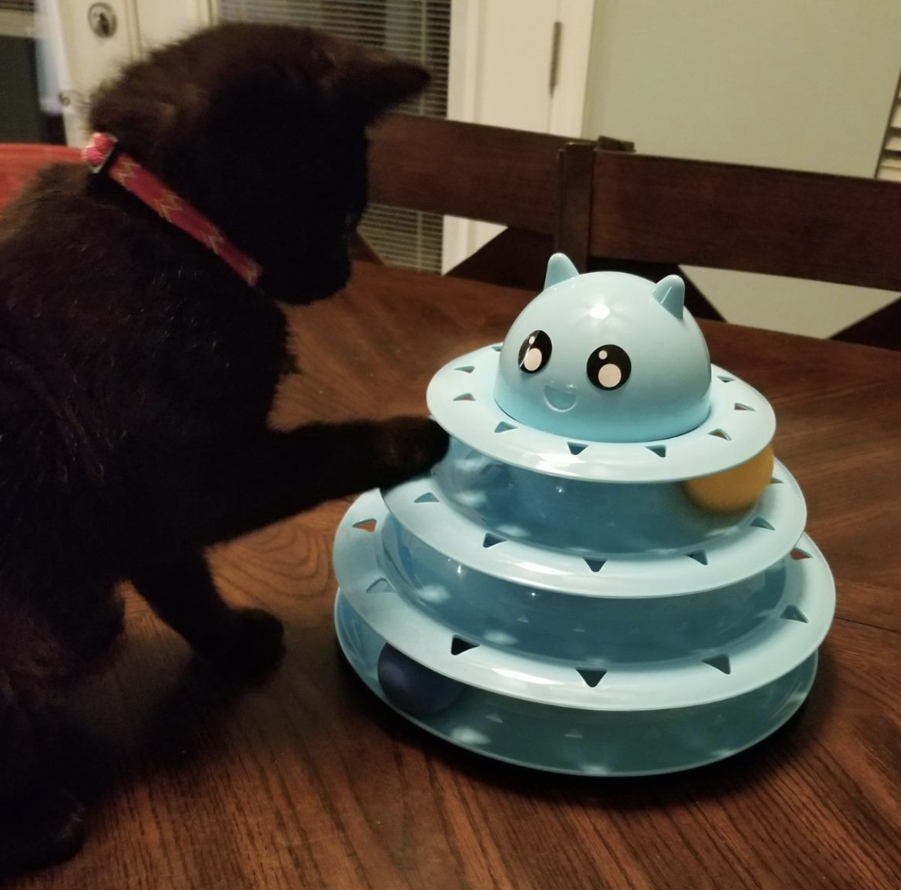 A black kitten sitting on a table, playing with a three-tiered ball roller toy