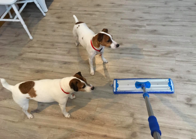 a reviewer's photo of the mop in use next to two dogs