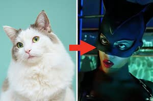 A cat is on the left with an arrow pointing at Halle Berry in a Catwoman suit