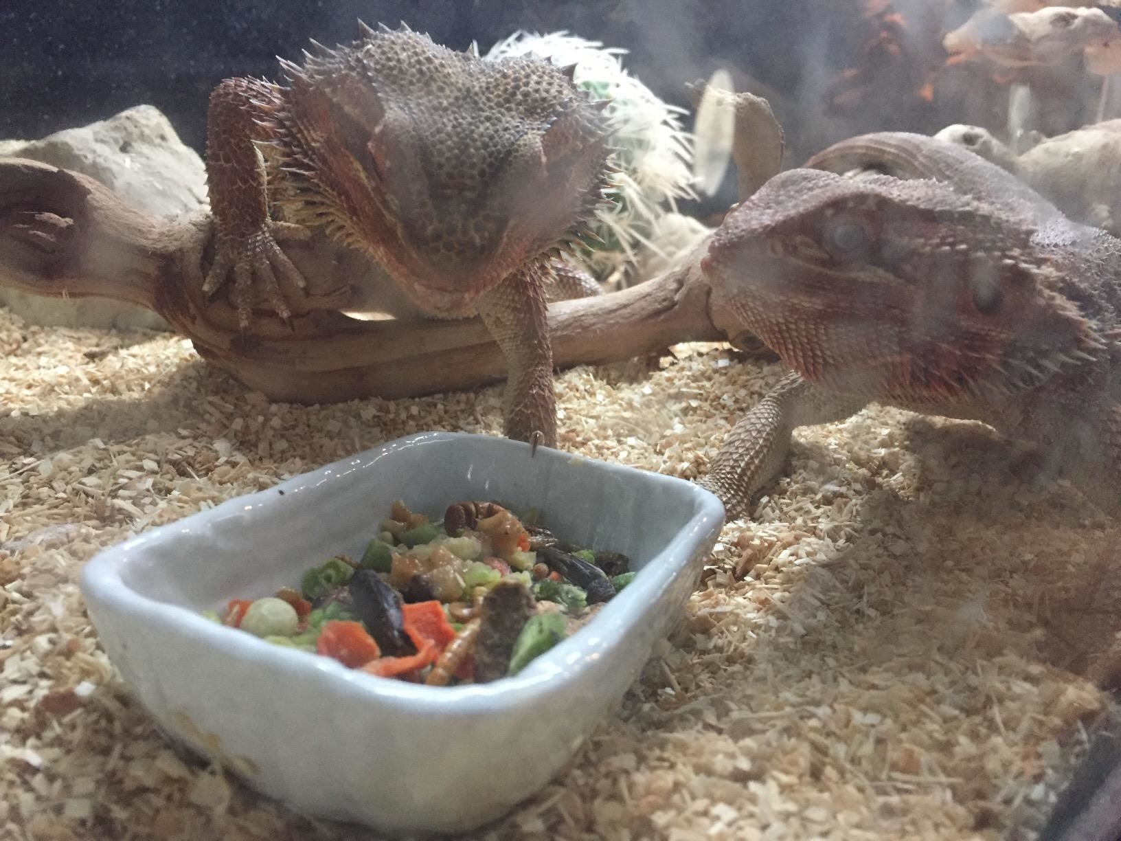 Reviewer image of product being enjoyed by reptiles