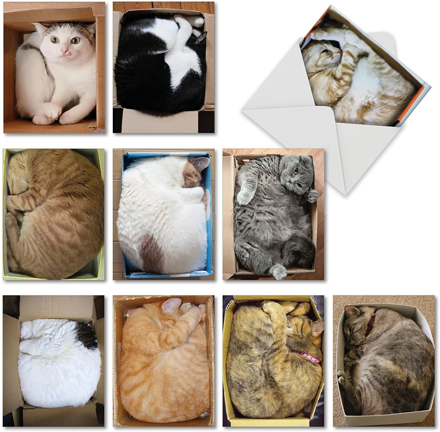 Cards with images of cats smushed into boxes