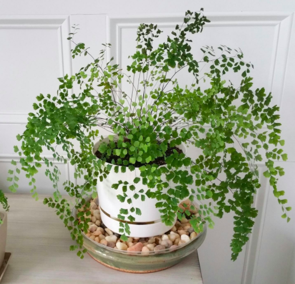a reviewer's photo of their plant in the white pot