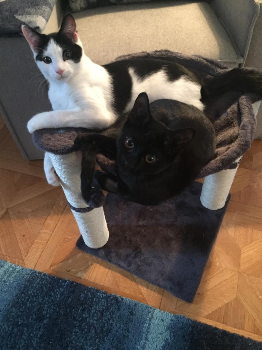The cat condo with the reviewer's two cats in it