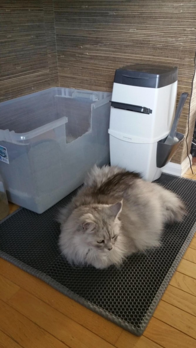The reviewer's cat sitting on the litter mat