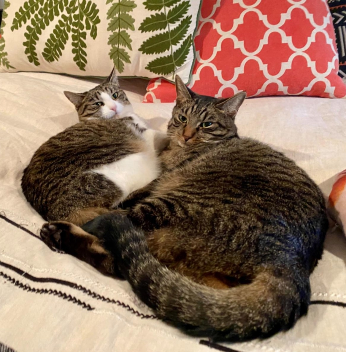 The reviewer's cats relaxing after the classic calming diffuser