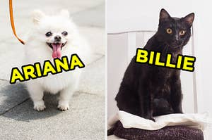 """On the left, a fluffy Pomeranian puppy out for a walk labeled """"Ariana,"""" and on the right, a cat sitting on a stack of towels labeled """"Billie"""""""