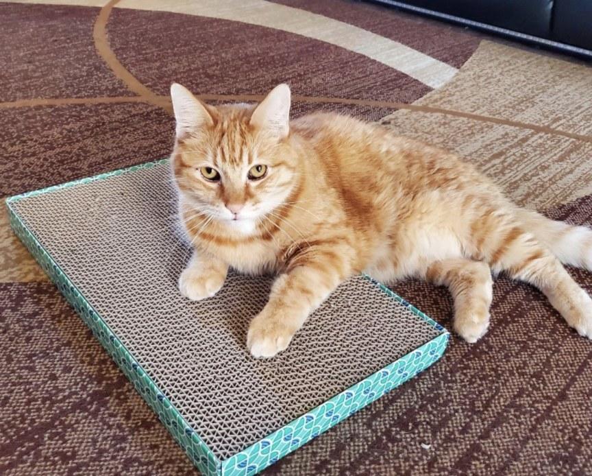 A cat on top of a cardboard scratcher