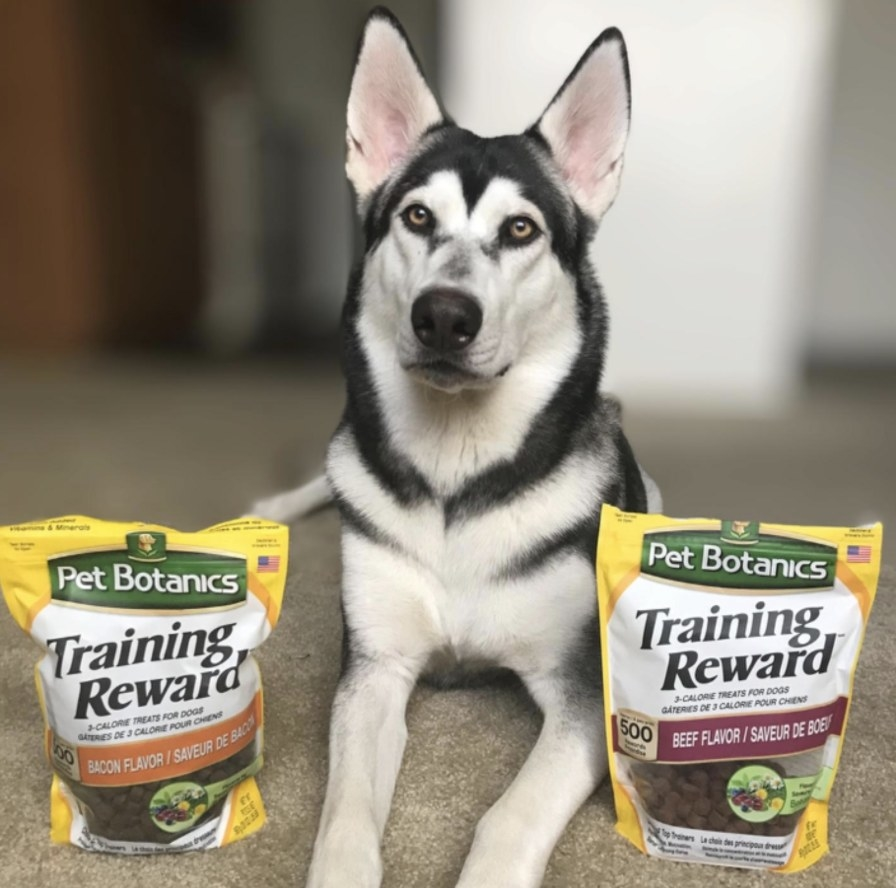 A dog next to two bags of treats