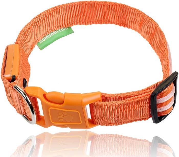 the collar in orange