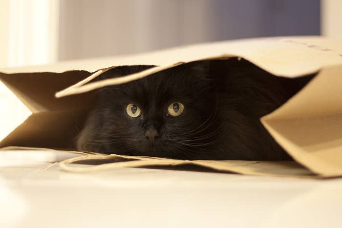 Black cat in brown paper back.