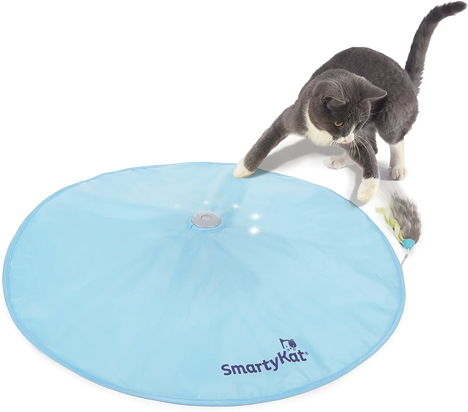 Cat playing with large, flat disk toy