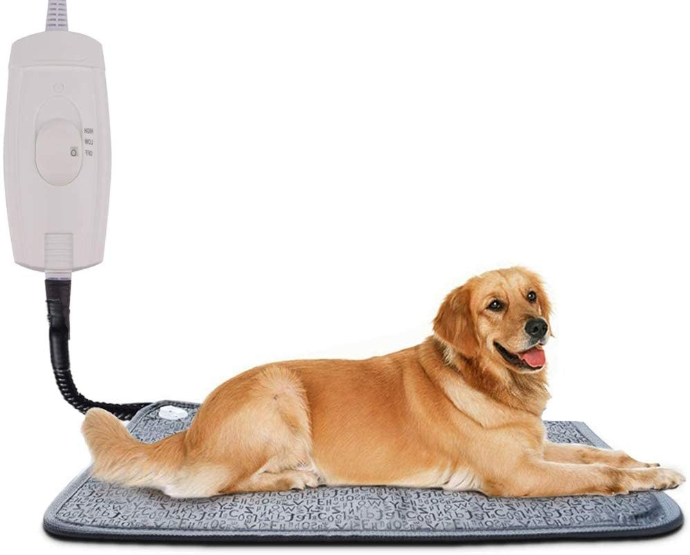 Relaxed dog sitting on the heating pad