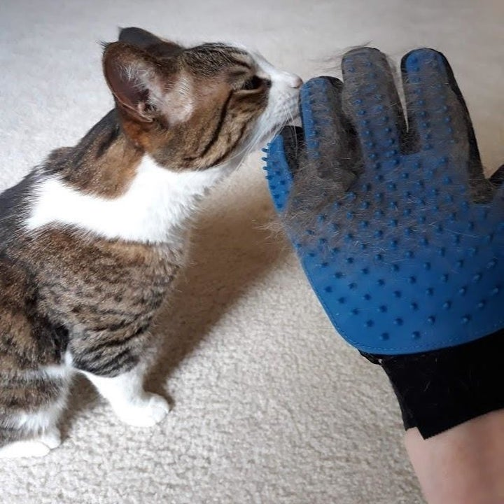 Another reviewer with clumps of hair in glove and kitten beside them