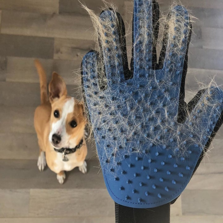 Reviewer with clumps of hair in their glove and their dog sitting beneath them