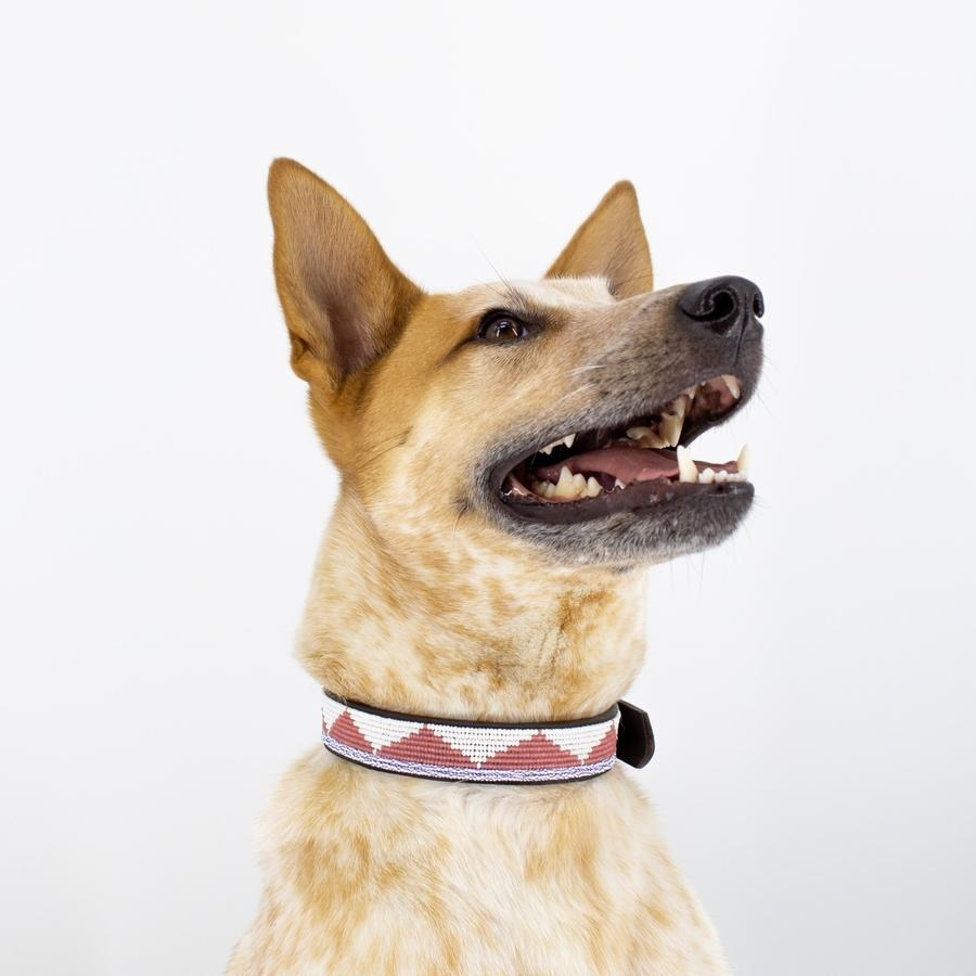Dog wearing the red and white pyramid beaded collar