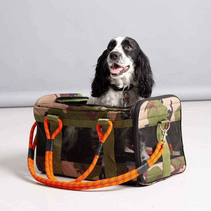 Black and white dog in camo carrier