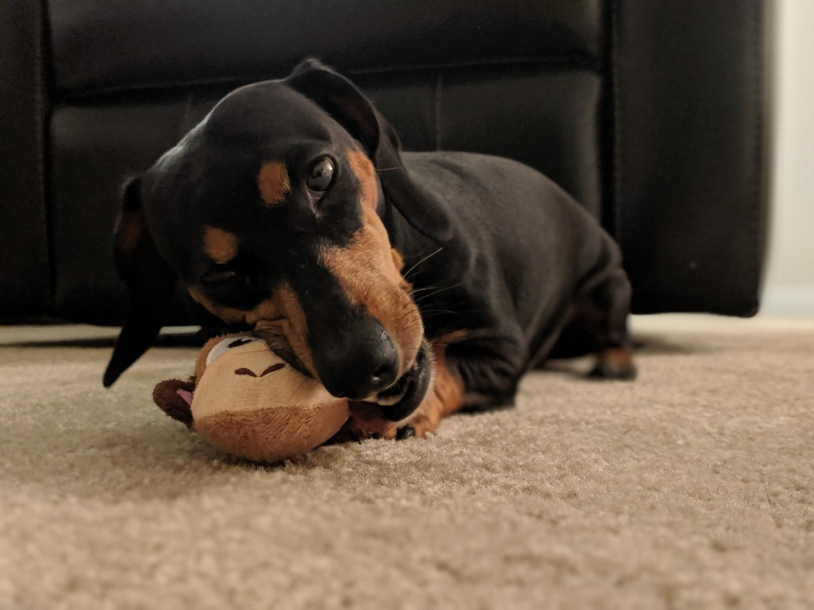 Reviewer's photo of their dog playing with the stuffed monkey