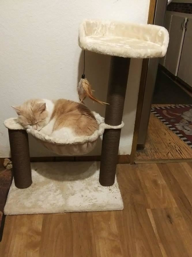 Reviewer's photo of their cat sleeping in the cat tree's hammock