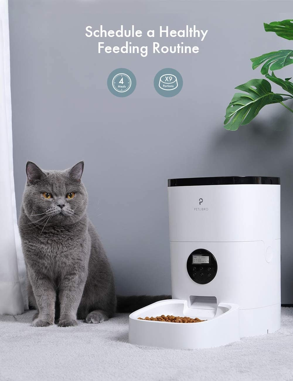 A cat sitting next to the feeder, which has a tray full of fresh food