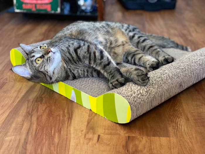 A reviewer's cat resting on the cat scratcher