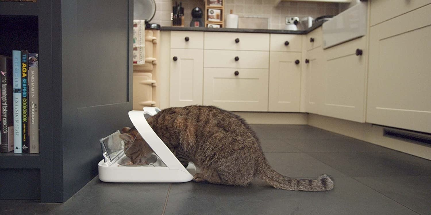 cat eating out of a microchip cat feeder that is placed in a kitchen