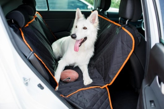 swiss shepherd sitting on a car seat cover while in the back seat of the car