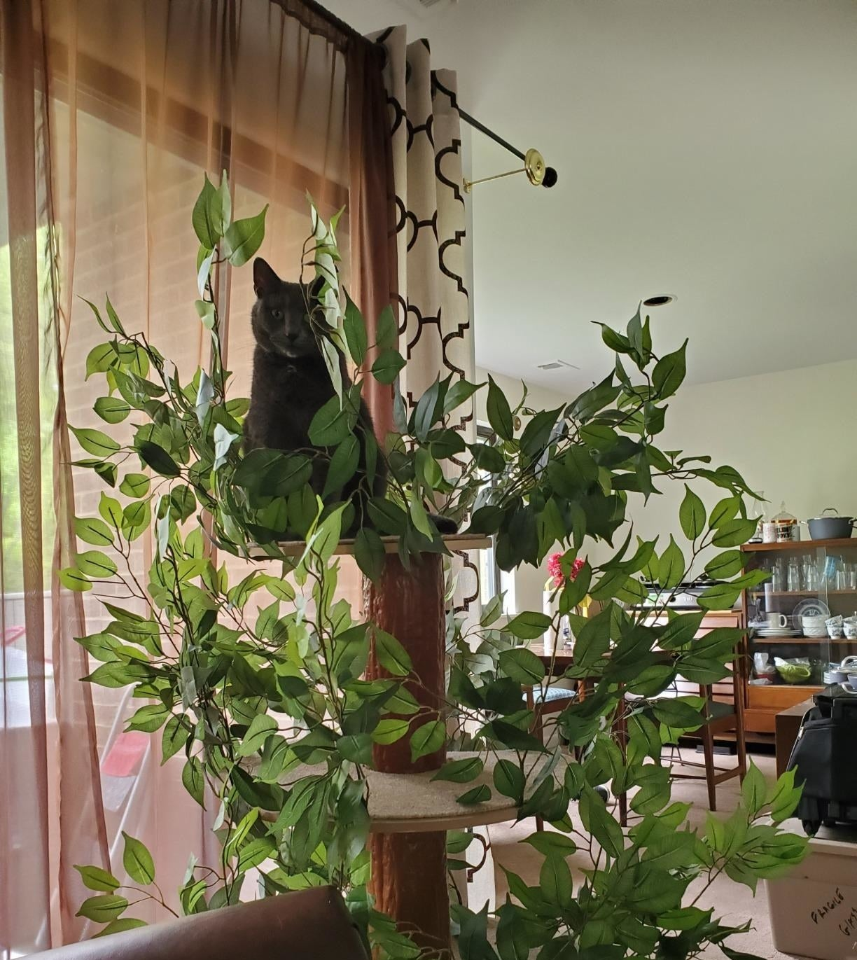 A reviewer's cat sitting in the treehouse