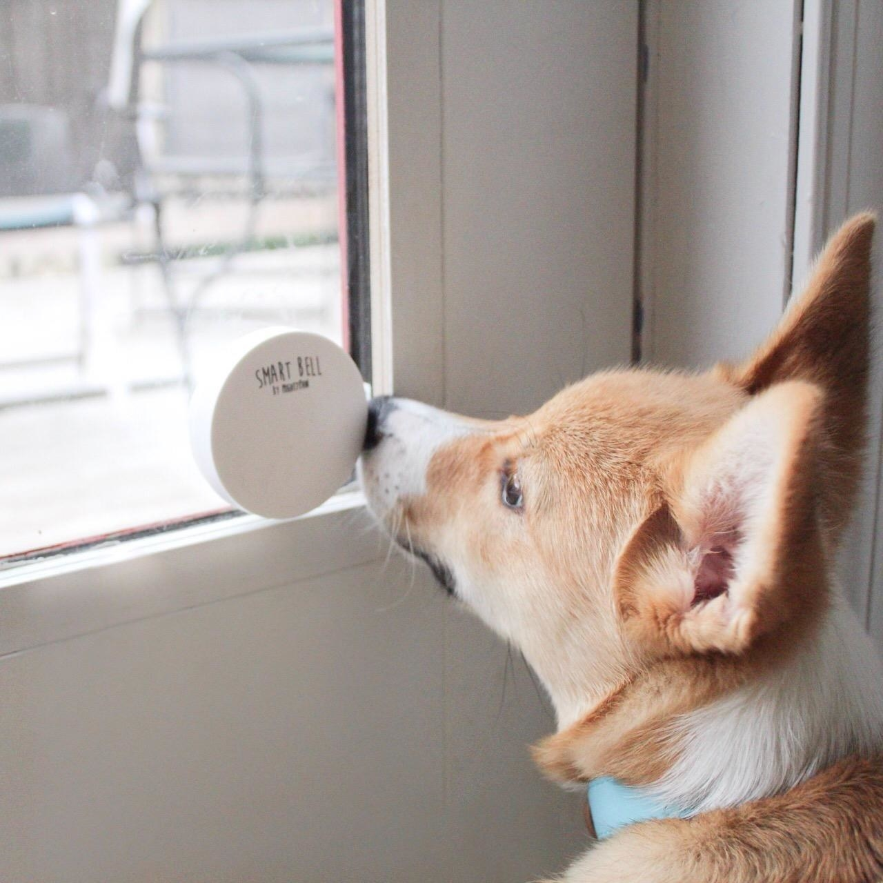 Reviewer's photo showing their dog ringing the white communication doorbell