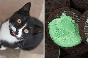 在左边,燕尾服小猫,并在右边,薄荷奥利奥