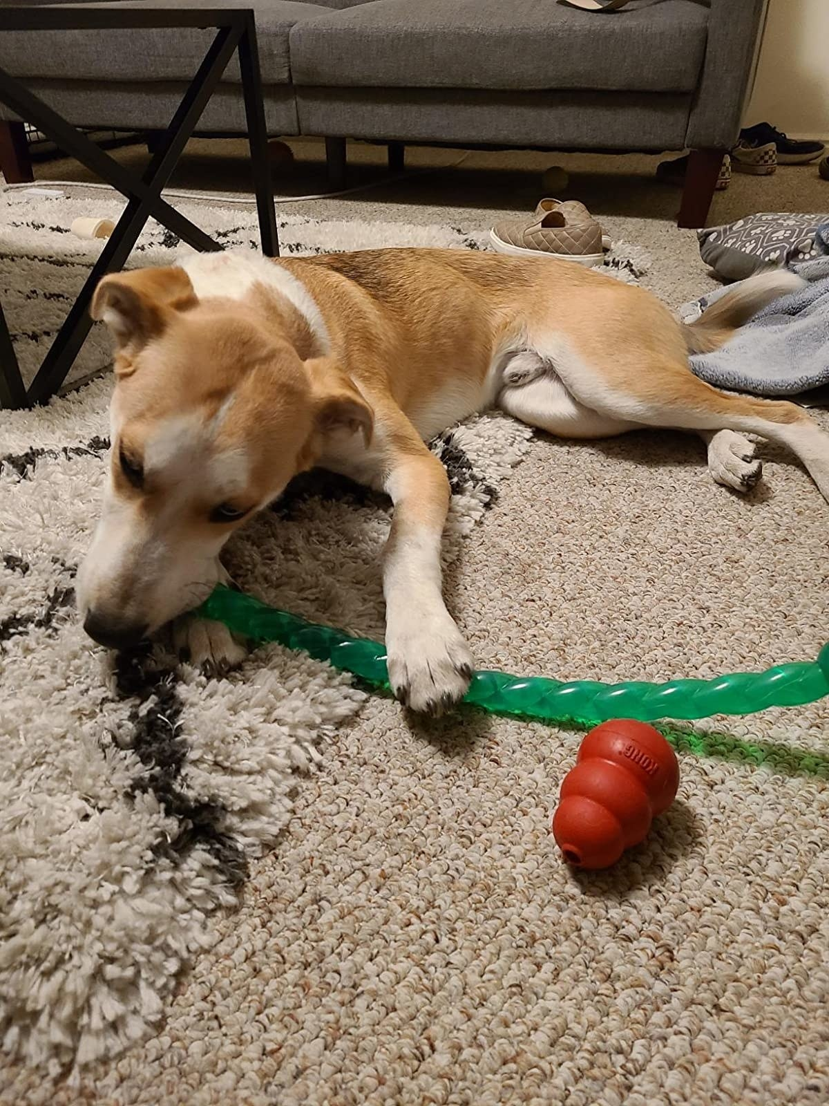 Reviewer's photo of their dog chewing on the green rope