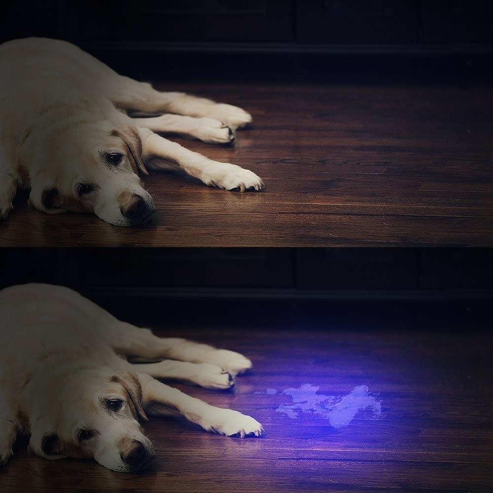 The UV flashlight shows the dog's urine in the bottom photo